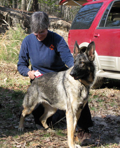 K9 Shar enjoys a good grooming